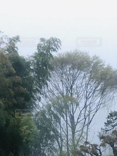 森の中の大きな木の写真・画像素材[2095635]
