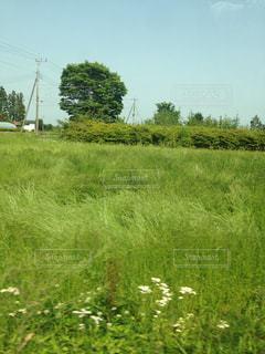 緑豊かな野原の接写の写真・画像素材[2102576]