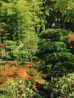 茂みと木々のグループの写真・画像素材[2102580]