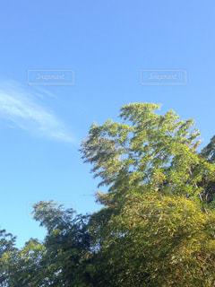 竹林の写真・画像素材[2103989]