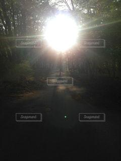 森の中の光の写真・画像素材[2145029]