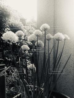 モノトーンの写真・画像素材[2186085]