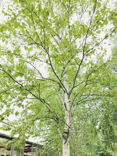木のクローズアップの写真・画像素材[2373480]