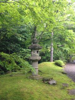 緑豊かな森を歩くの写真・画像素材[2379665]