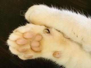 白い背景に横たわる猫のクローズアップの写真・画像素材[2379693]