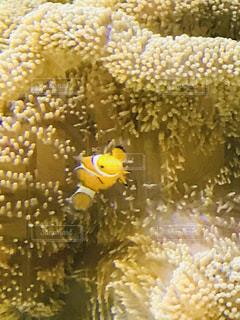 サンゴのクローズアップの写真・画像素材[2381362]