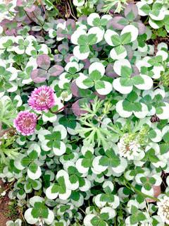 花園のクローズアップの写真・画像素材[2381838]