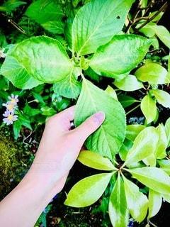緑の植物のクローズアップの写真・画像素材[3318575]