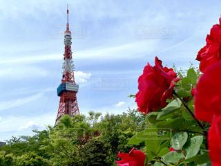東京タワーの写真・画像素材[2101375]