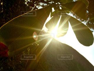 木のクローズアップの写真・画像素材[2101459]