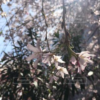 花のクローズアップの写真・画像素材[2103136]