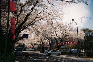 通りに車が並んでいるの写真・画像素材[2266222]
