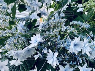 花のクローズアップの写真・画像素材[2266250]