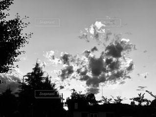 木と雲の写真・画像素材[2266306]