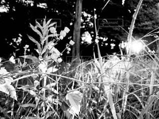 花のクローズアップの写真・画像素材[2266459]