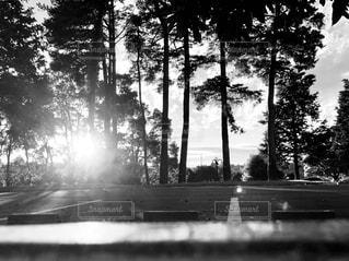 木のクローズアップの写真・画像素材[2266460]