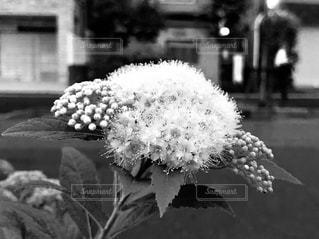 花のクローズアップの写真・画像素材[2266518]