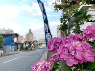 花のクローズアップの写真・画像素材[2266519]