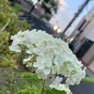 花のクローズアップの写真・画像素材[2266522]