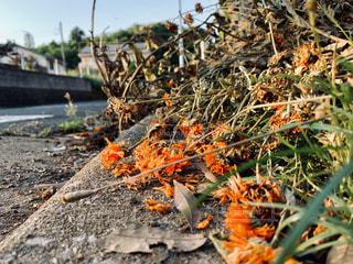 岩の花の写真・画像素材[2266637]