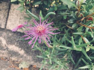 植物のクローズアップの写真・画像素材[2266638]
