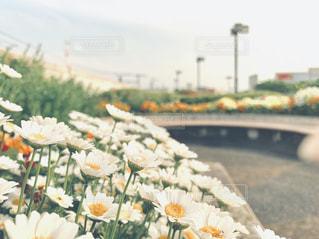 花のクローズアップの写真・画像素材[2268925]