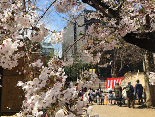 木の隣に立っている人々のグループの写真・画像素材[2284934]
