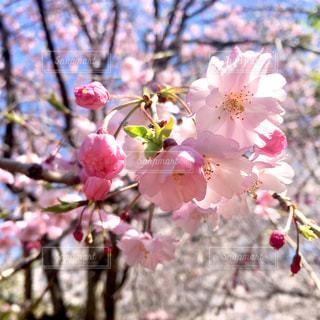 花のクローズアップの写真・画像素材[2284941]