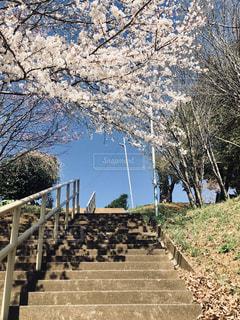 フェンスの隣の木の写真・画像素材[2284943]