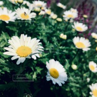 黄色い花の写真・画像素材[2284961]