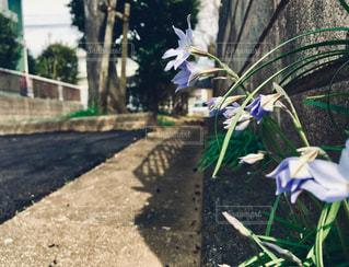 庭の植物の写真・画像素材[2284963]