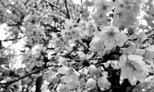 花のクローズアップの写真・画像素材[2284965]