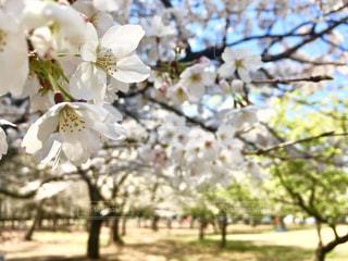 花のクローズアップの写真・画像素材[2284967]