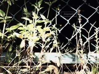 夜の写真・画像素材[2667987]