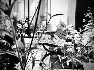花の写真・画像素材[2668093]