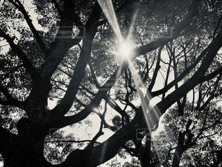 木のクローズアップの写真・画像素材[2911929]
