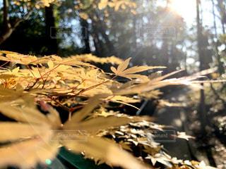 木のクローズアップの写真・画像素材[2911930]