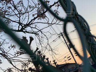 木の上に座っている鳥の写真・画像素材[3081055]