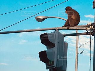 猿も朝焼けは気分爽快です。の写真・画像素材[2097717]