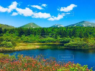 八甲田に初夏の訪れ。の写真・画像素材[2103860]