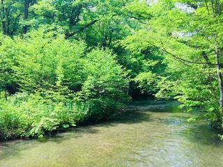 初夏の奥入瀬渓流は気分爽快です。の写真・画像素材[2108975]