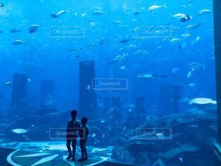 納涼。水中散歩。の写真・画像素材[2310263]