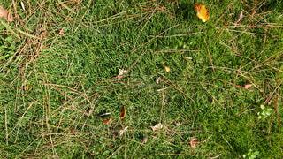 芝生の写真・画像素材[2102182]