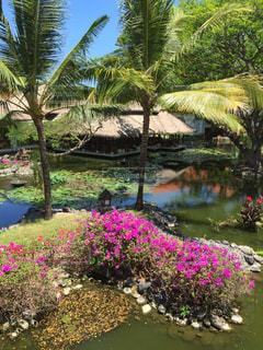 バリ島のクラブラウンジの写真・画像素材[2106048]
