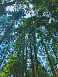 森の中の写真・画像素材[2108106]