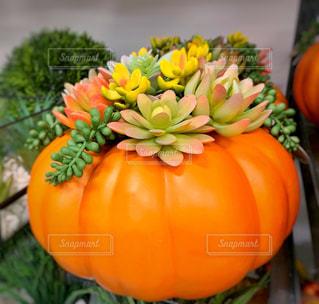 かぼちゃのプランターの写真・画像素材[2422063]