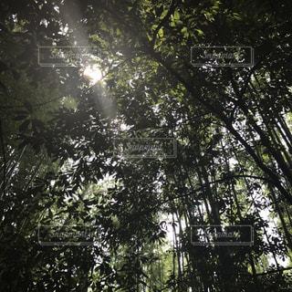 森林 木漏れ日の写真・画像素材[2098528]