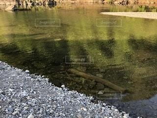 池の接写の写真・画像素材[2099678]