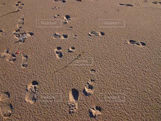 砂浜のあしあとの写真・画像素材[2100002]