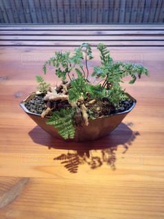 おしゃれな観葉植物の写真・画像素材[2101148]